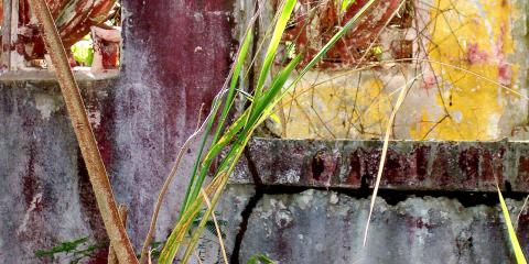 abstract wall vieques