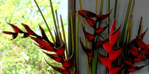 flowers Vieques 2015